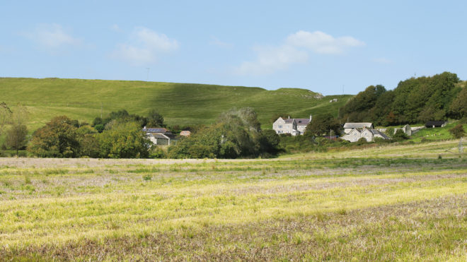 Green meadows of Corton Farm in Thomas Hardy county