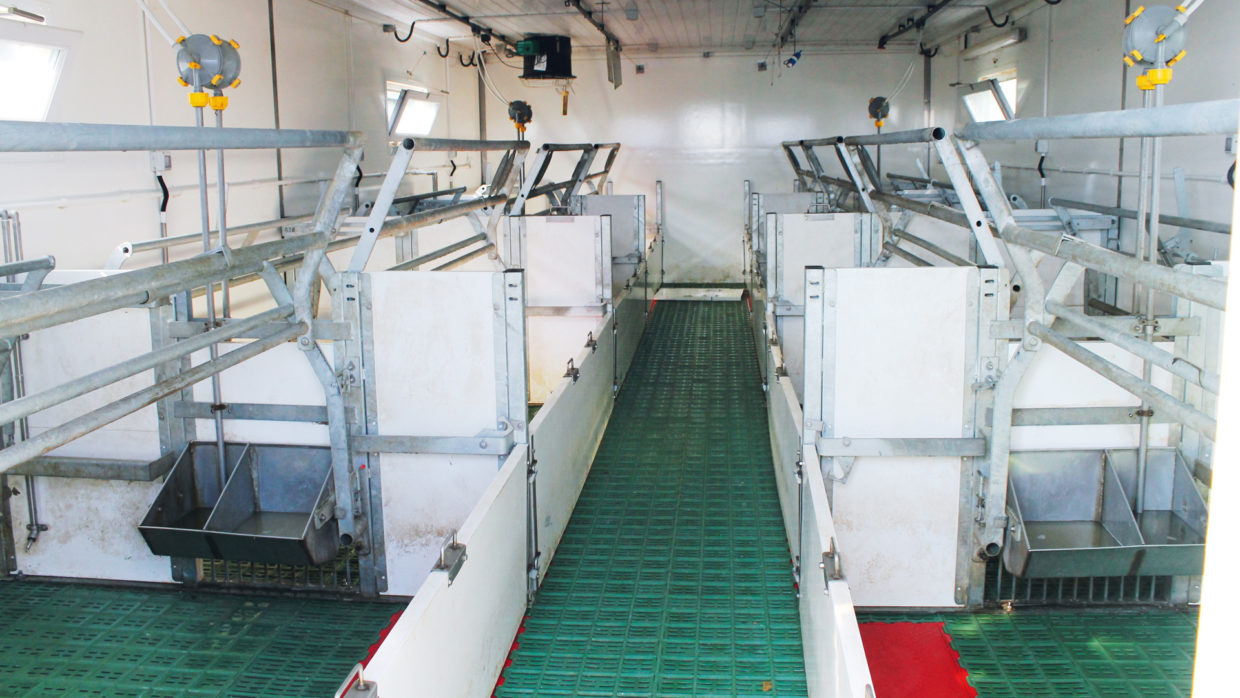 Batching and disinfection system on a pig farm